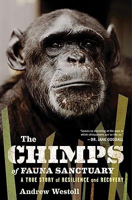 Image for CHIMPS OF FAUNA SANCTUARY