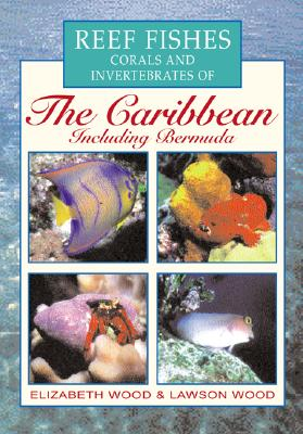 Image for Reef Fishes Corals and Invertebrates of the Caribbean : A Diver's Guide