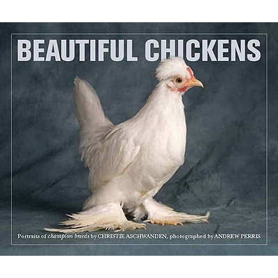 Image for Beautiful Chickens