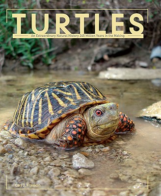 Image for Turtles
