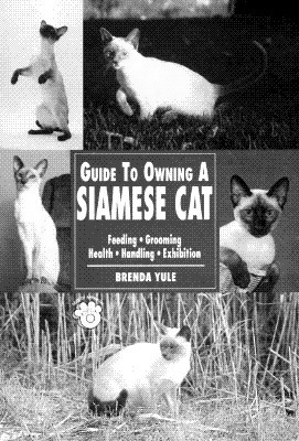 Image for Guide to Owning a Siamese Cat