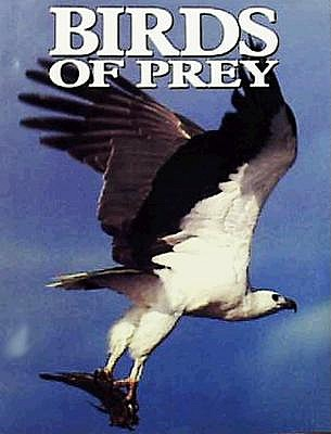 Birds of Prey, Olsen, Penny