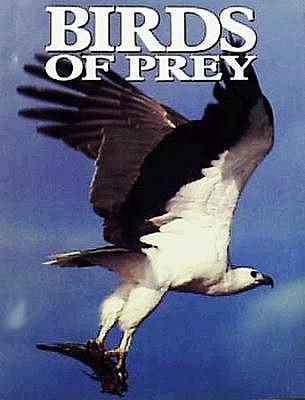Birds of Prey, Olsen, Penny