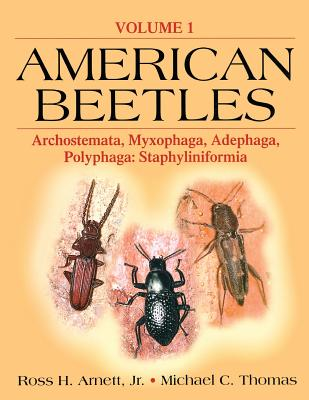 Image for American Beetles, Volume I