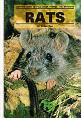 Image for Rats (Small Animals)