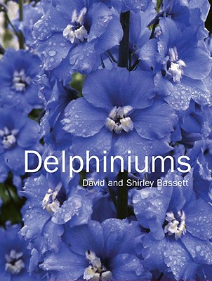 Delphiniums, Bassett, David and Shirley