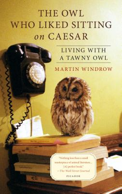Image for Owl Who Liked Sitting on Caesar: Living With A Tawny Owl