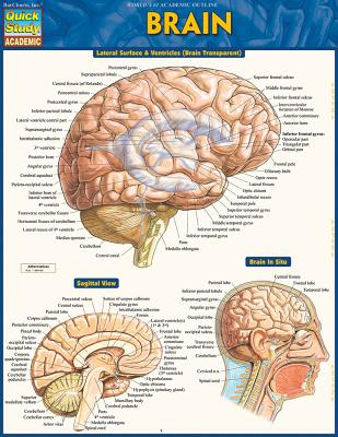Image for Brain (Quick Study Academic)