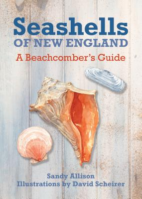 Image for Seashells Of New England