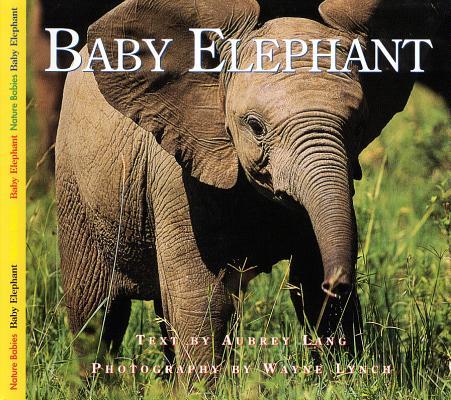 Baby Elephant (Nature Babies), Aubrey Lang