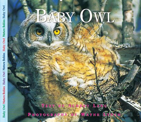 Image for Baby Owl (Nature Babies)
