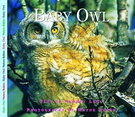 Baby Owl (Nature Babies), Aubrey Lang