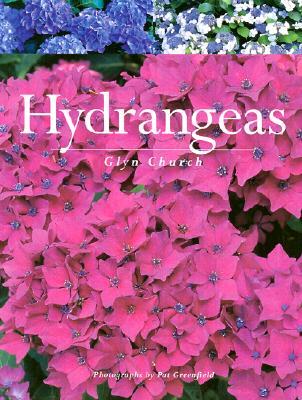 HYDRANGEAS, GLYN CHURCH