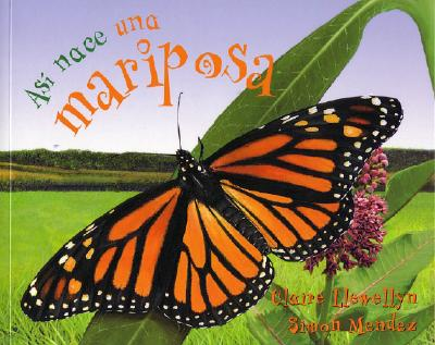 As� nace una mariposa (Starting Life Butterfly) (As� nace/ Starting Life) (Spanish Edition), Llewellyn, Claire