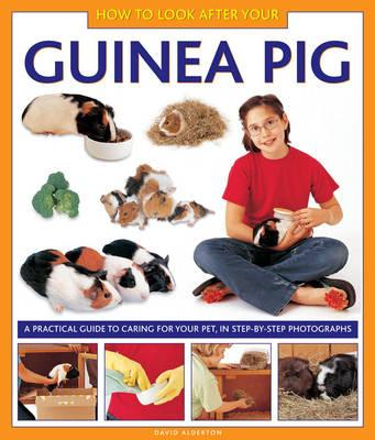 Image for How to Look After Your Guinea Pig: A Practical Guide to Caring for Your Pet, in Step-by-step Photographs